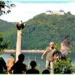 roofvogel_wildpark_edersee